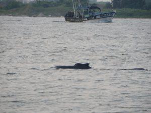 Narwhals in Kochi