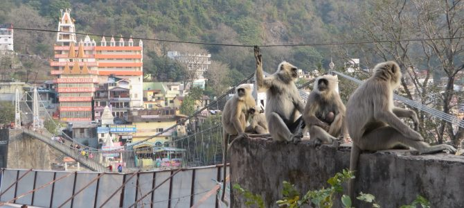 Rishikesh, India – Day 840-860 (Jan 17-Feb 6, 2016): The Monkeys of Rishikesh