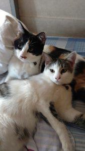 Kittens Xena Freya